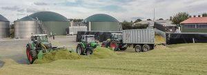 Mais hächseln Lohnunternehmen Zöller Süstedt