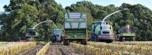 Lohnunterehmen Werner Zöller beim Mais häckseln
