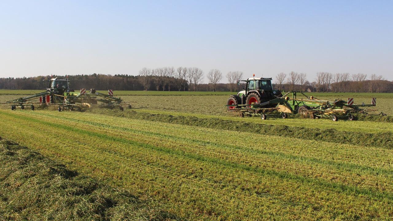 Gras schwaden (1)