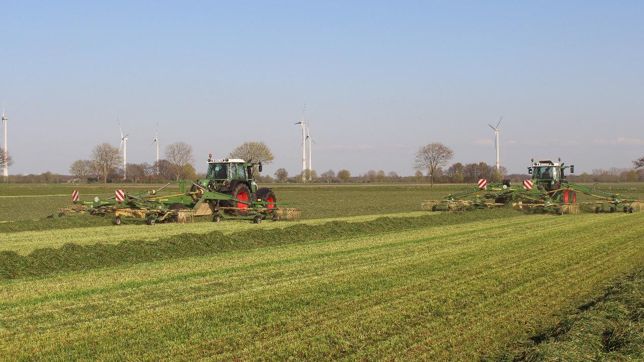 Gras schwaden (2)