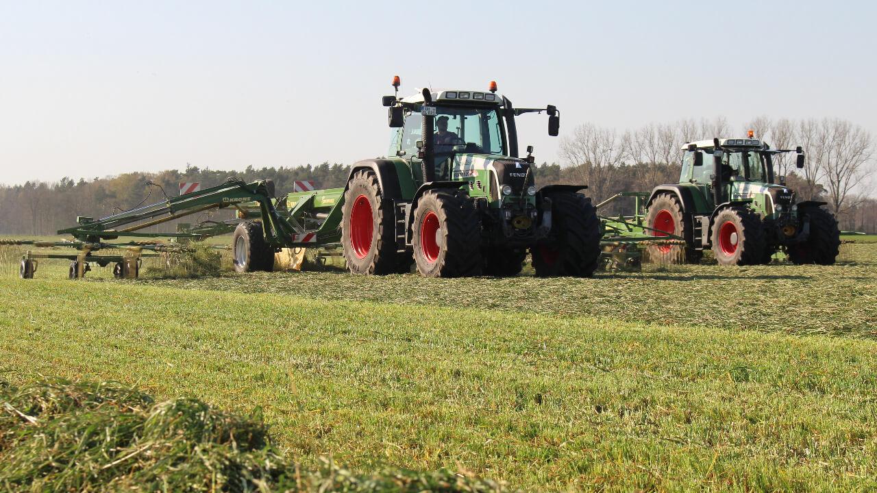 Gras schwaden (4)